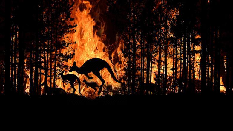 incendii australia GettyImages