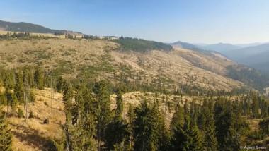 defrisari-paduri-muntii-maramuresului