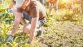 GettyImages muncitori sezonieri ferma agricultura