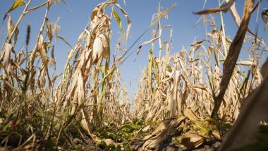 Secetă puternică şi extremă în marea parte a regiunilor agricole