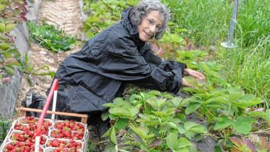 O jurnalistă germană s-a angajat la o fermă de căpșuni unde lucrează români