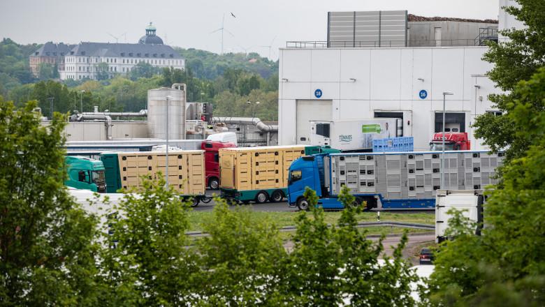 Focar de coronavirus la cel mai mare abator din Germania