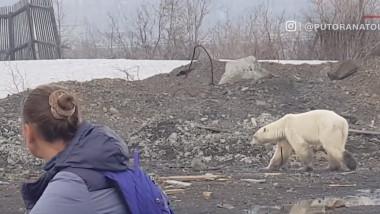 urs-polar-siberia-orasul-norilsk-captura-cnn