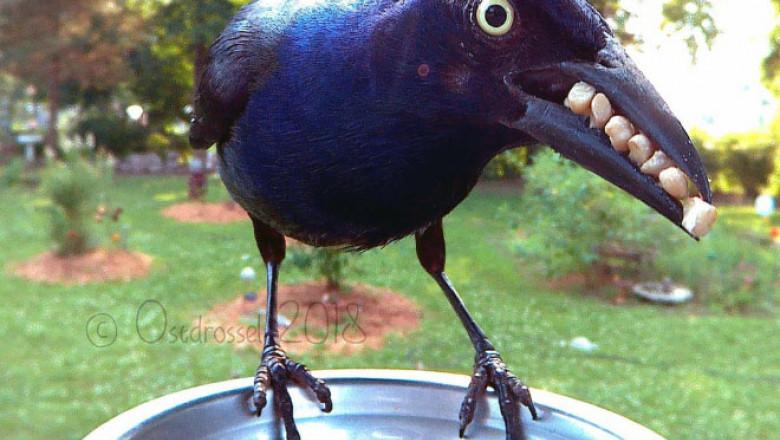 bird23