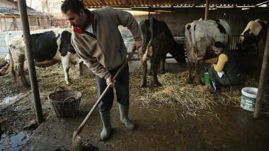 Fermierii vor primi bani pentru animalele pe care le au acum, nu pentru cele de acum șapte ani