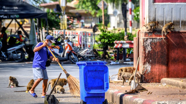 """Localnicii din """"Orașul Maimuțelor"""" încearcă să-și recucerească teritoriul după ce populația de macaci a scăpat de sub control"""