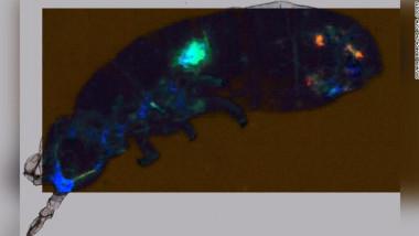 Cercetatorii au descoperit microplastic in corpul unui animal din Antarctica
