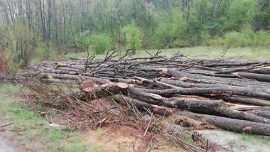 defrisari-ilegale-lemne