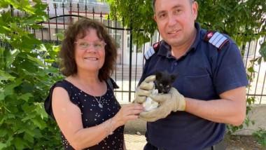 pui de pisică salvat de pompieri
