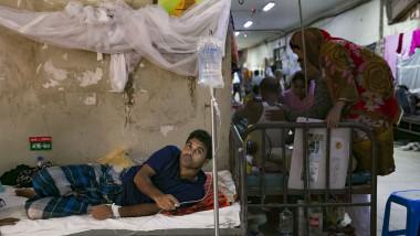 epidemie de febră dengue în asia