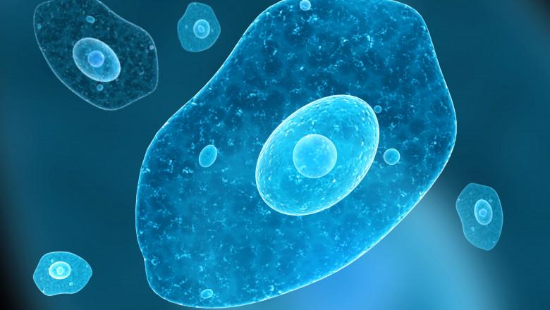 Amiba care se hrănește cu creierul uman a fost descoperită în 1962.