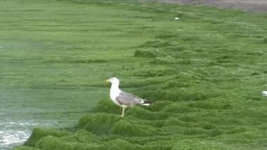 litoral alge 1