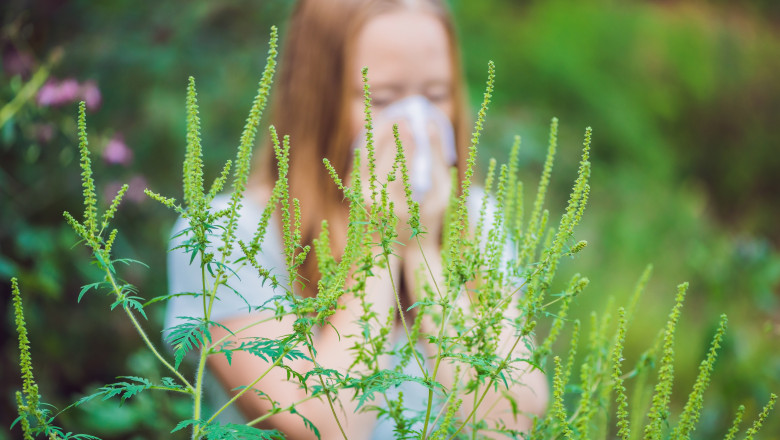 Young woman sneezes because of an allergy to ragweed