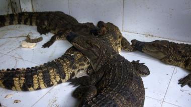 Vietnamul stopează importurile de animale sălbatice şi închide pieţele în care erau comercializate