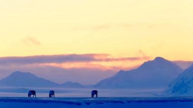Arhipelagul norvegian Svalbard este situat în regiunea arctică