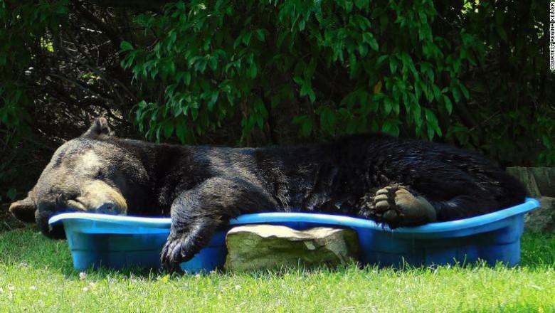 Un urs negru a fost surprins relaxându-se într-o piscină pentru copii