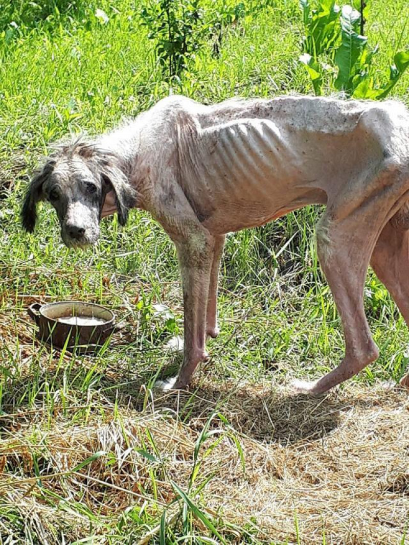 câine abandonat Suceava