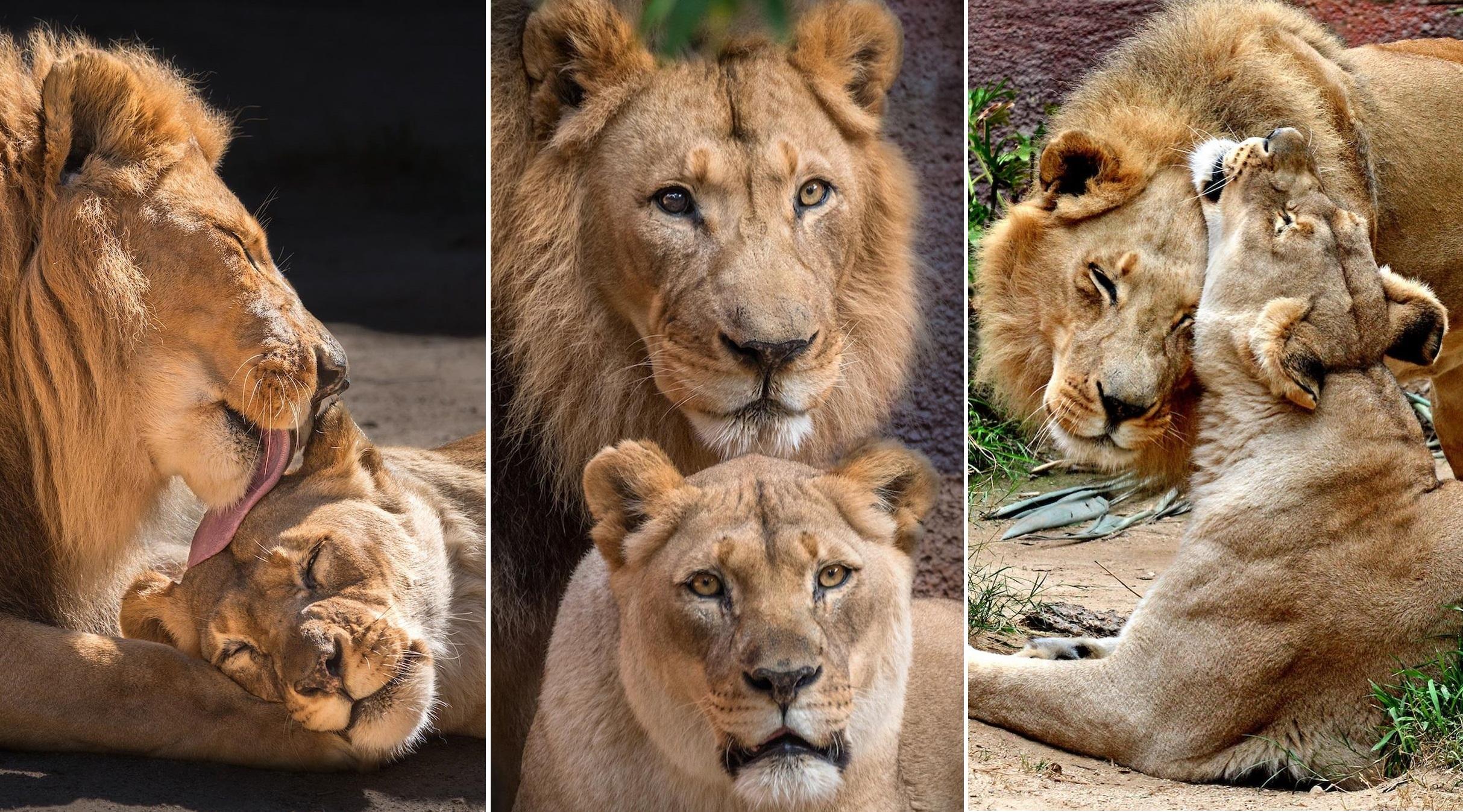 Doi lei batrani au fost eutanasiati impreuna, pentru a nu fi nevoiti sa traiasca singuri. Povestea emotionanta a lui Hubert si Kalisa