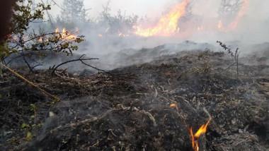 Incendiile din vara acestui an din Siberia au provocat emisii record de CO2
