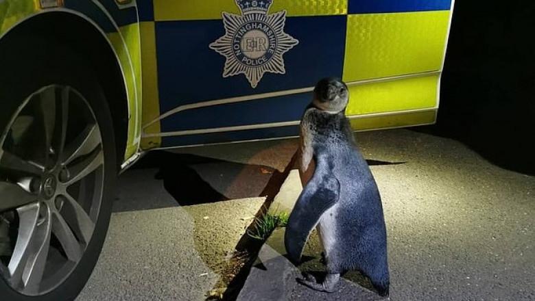 pinguin nottinghamshire police
