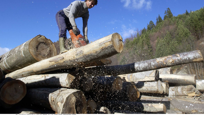 tăier buștean de lemn cu drujba