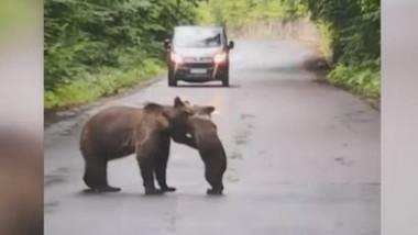 ursulet se joaca cu mama lui harghita