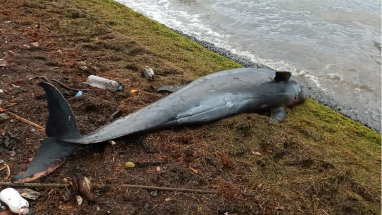 delfin mort