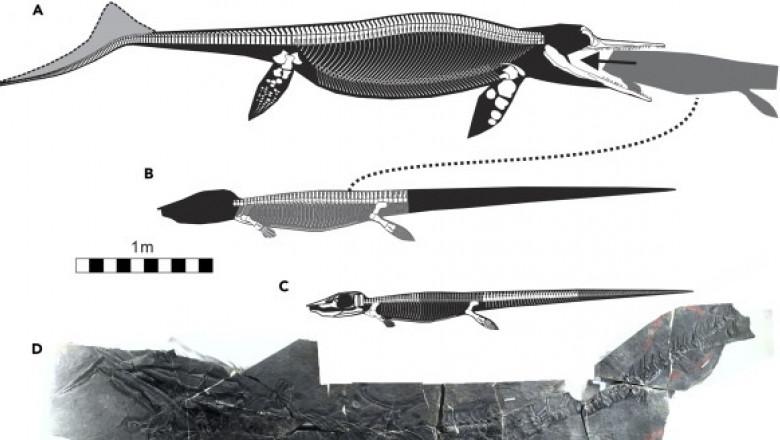 reptile triasic1