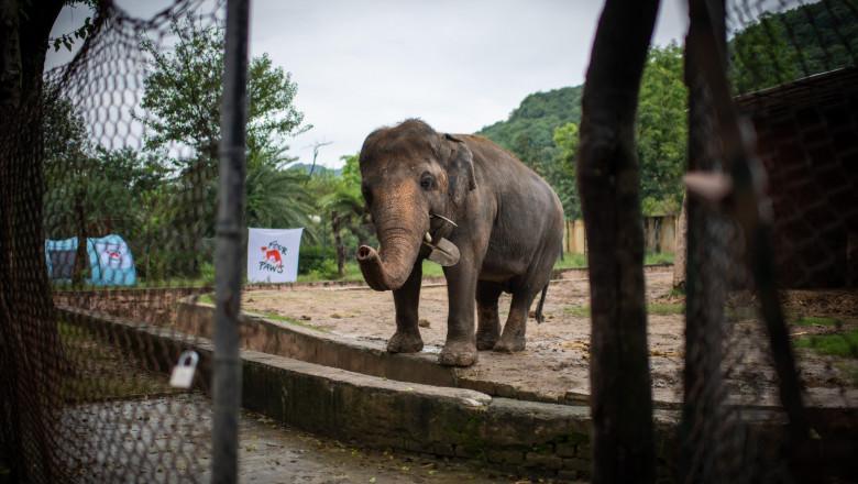 elefantul kaavan