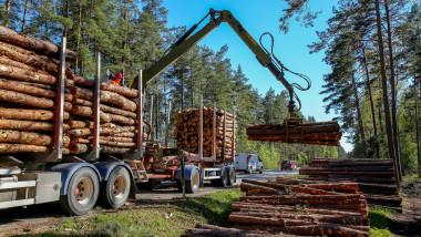 camion lemne defrisari padure