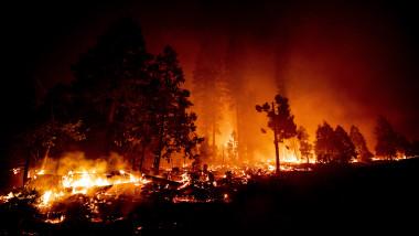 Incendiile de vegetație din California au distrus o suprafata record