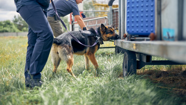 Politisti de frontiera cu caini cauta marfa de contrabanda