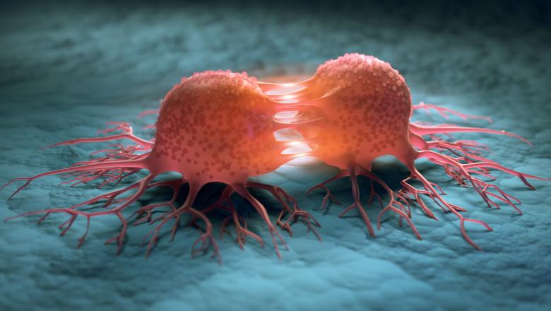 celule canceroase care se reproduc