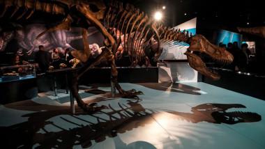 Unul dintre cele mai mari schelete de Tiranozaur din lume, scos la vânzare