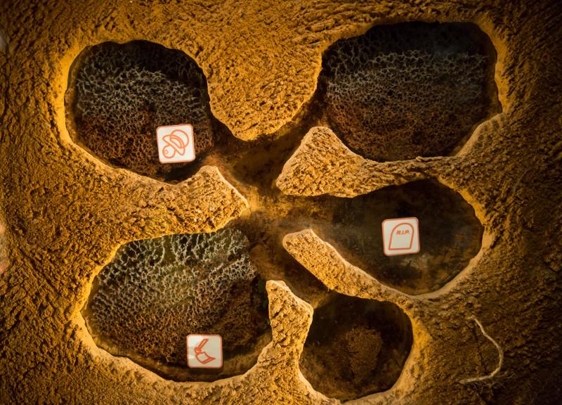 colonie de furnici