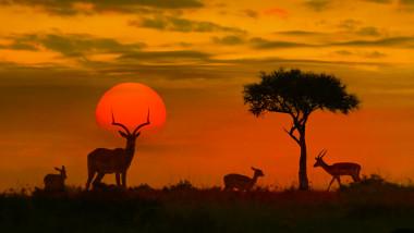 Declin catastrofal. Populaţiile de animale sălbatice au scăzut cu peste două treimi în 50 de ani