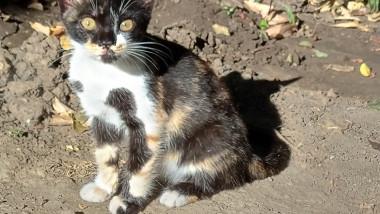 pui de pisica abandonat - lp