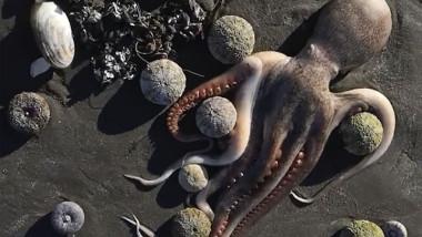 Dezastru ecologic în Rusia. Sute de animale marine au murit din cauza poluării, care ar putea fi legată de exerciții militare în zonă