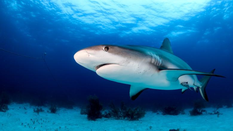 Cum sunt puși în pericol rechinii de un vaccin anti-Covid. 500.000 de exemplare ar putea fi ucise