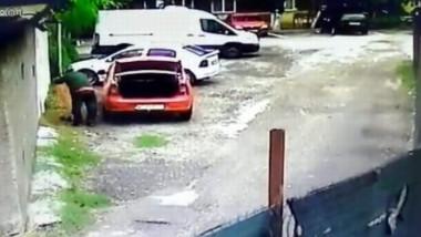 Politia cauta un barbat din Pitesti care a abandonat trei pisoi