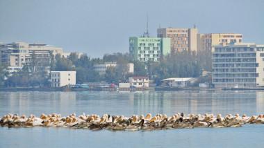 pelicani la Constanța