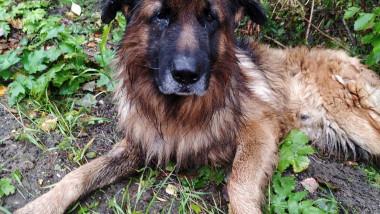 Un câine a supraviețuit după ce stăpânii i-au făcut injecția letală și l-au îngropat în pădure