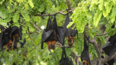 Un grup de lilieci într-un copac