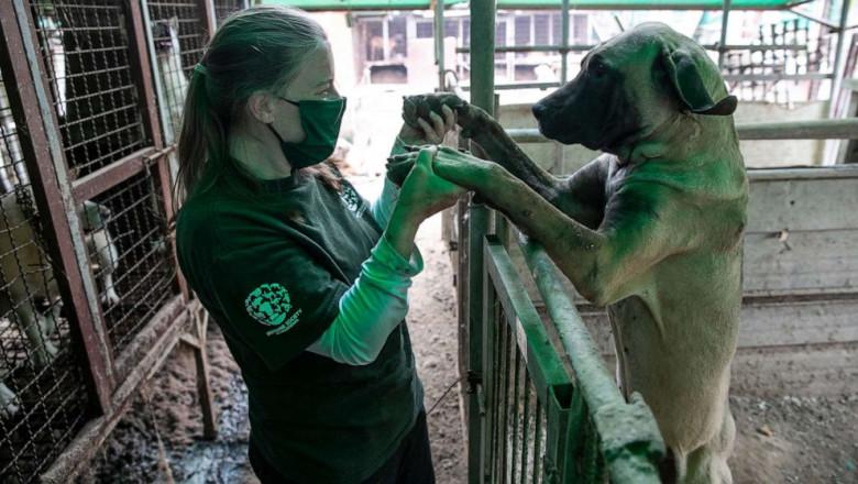 caini salvati dintr-un abator din coreea de sud