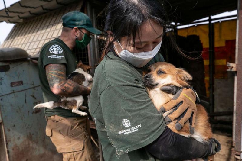 caine salvat din abator coreea de sud