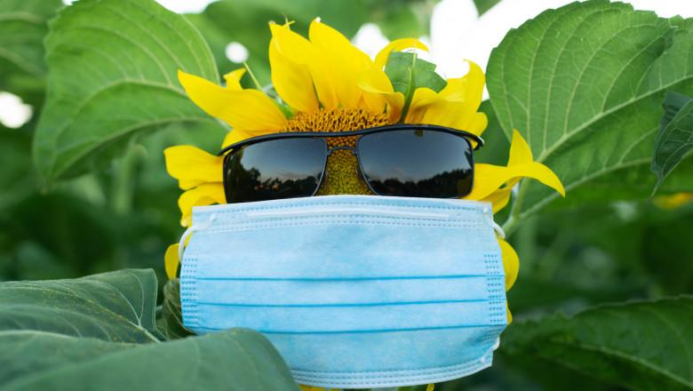 floarea soarelui cu masca