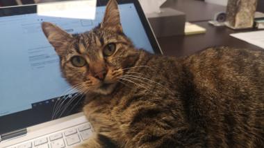Pisica primariei Firoiu 291020 (10)