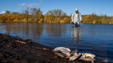 Greenpeace experts take samples from Kamchatka's river in polluted area