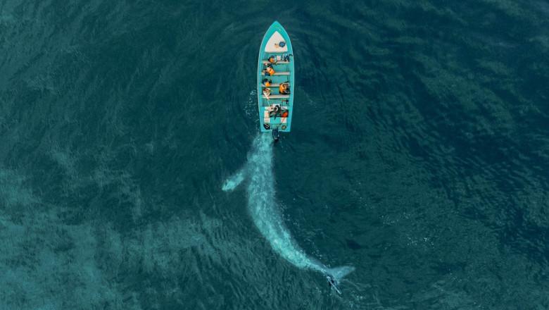 """O balenă uriașă se """"joacă"""" și împinge o barcă cu turiști"""
