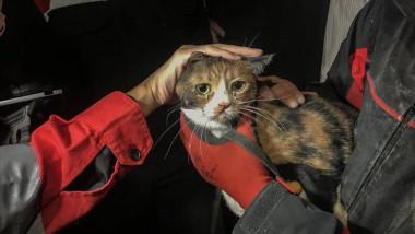 O pisică rănită a fost salvată de sub dărâmăturile unui bloc din Izmir de către un câine poliţist